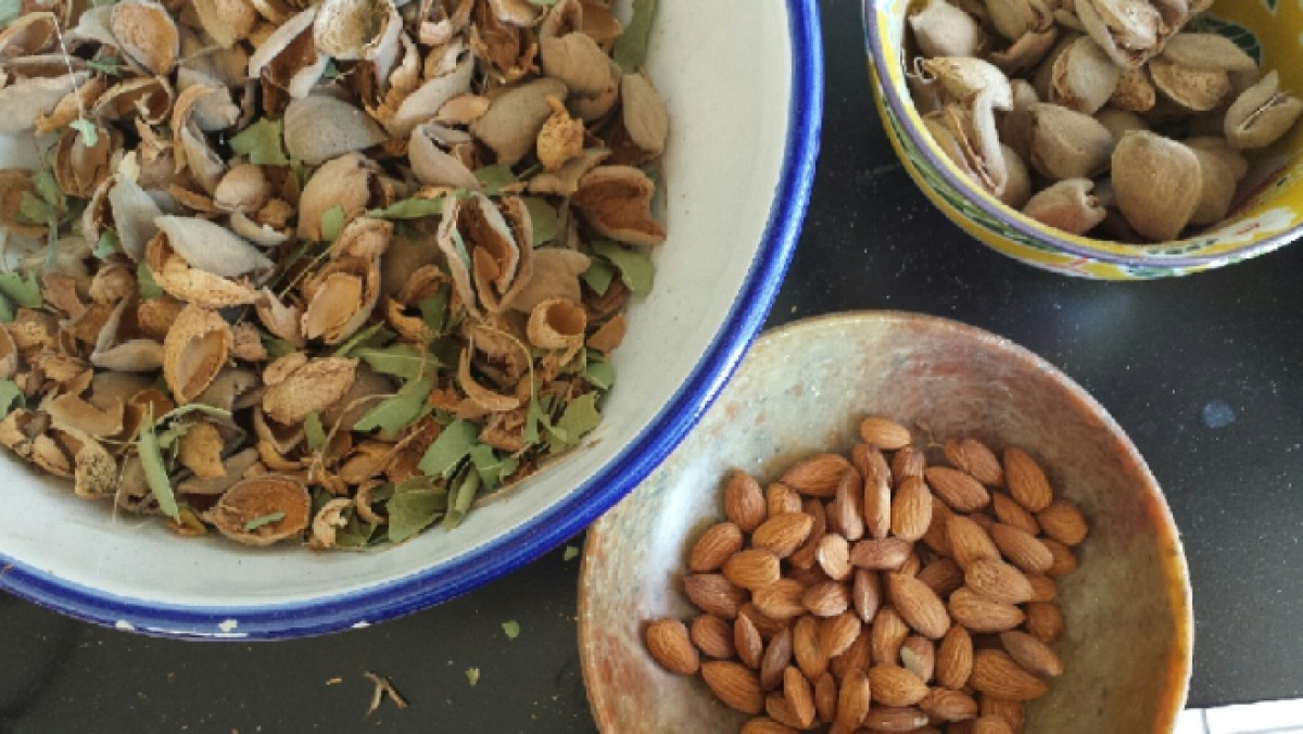 Almonds and shells and whole